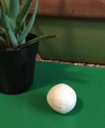 feo blog shamrock ball of clay
